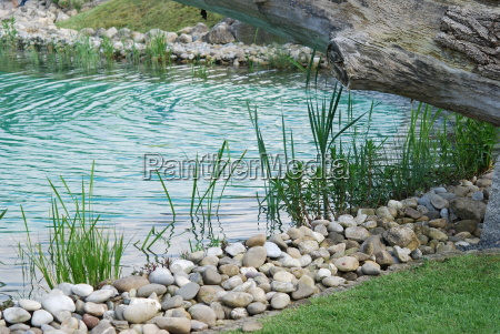 water plant seedling plant pond shore
