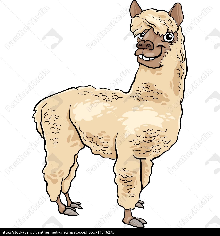alpaca, animal, cartoon, illustration - 11746275