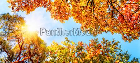 treetopsblue sky and sun in autumn