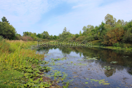 picturesque pond with water lilies