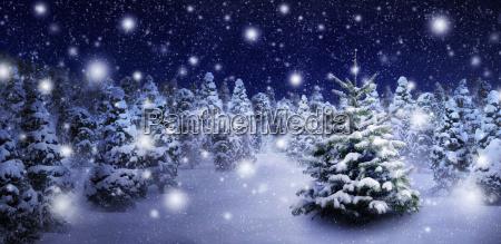 tannenbaum and evocative snowscape