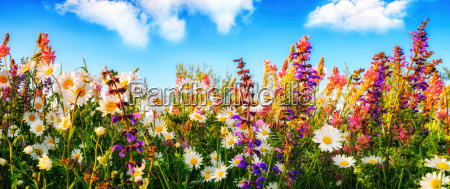 dense growing flowers on a meadow