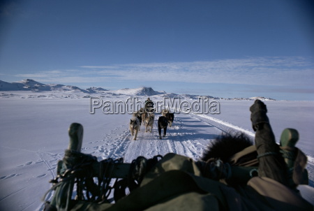 dog transport greenland polar regions