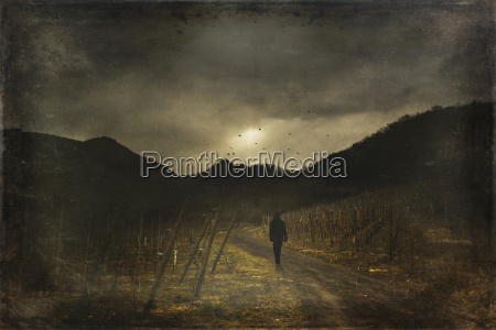 man walking on way vineyard