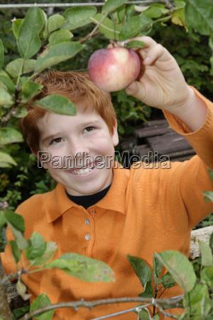 smiling boy picking an apple