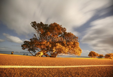 new zealand trees at sunset light