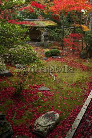 colour image color image vertical image