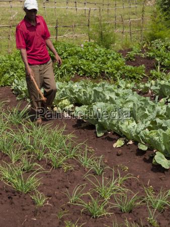 a farmer walks in his field
