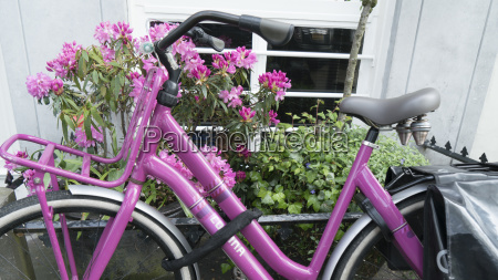 pink bicycle and rhododendron amsterdam netherlands