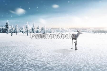 portrait of reindeer with antlers
