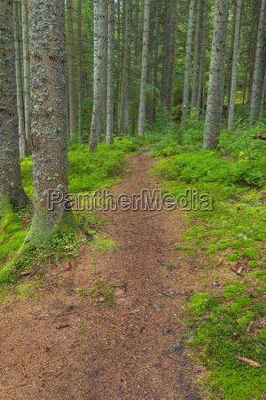 trail through forest at waldhauser in