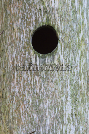 close up of hole in tree