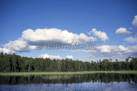 scenic view of trees and lake
