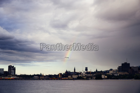 seagull flying through rainbow over river