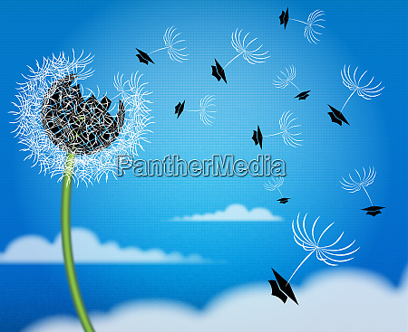mortarboards flying away on blowball seeds