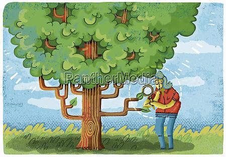 woman examining leaf on tree looking