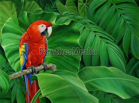scarlet macaw parrot perched on branch